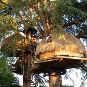 Séjour et événements sur-mesure : cabanes dans les arbres