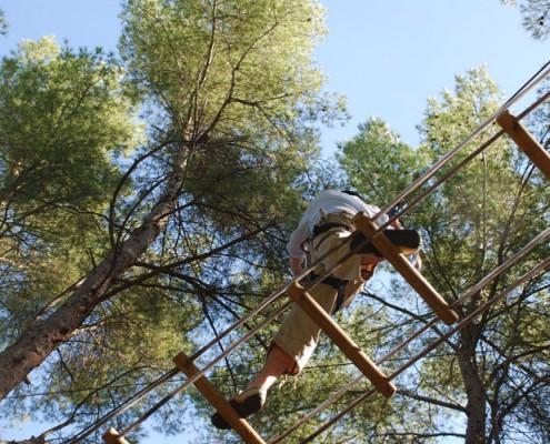 balade en hauteur dans les arbres événementiels sur-mesure
